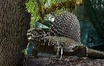 Revell Dinosaurus Dimetrodon     1:13