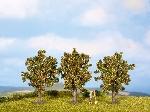 Noch Apfelbaume 3 st.